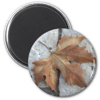 Dry maple leaf magnet