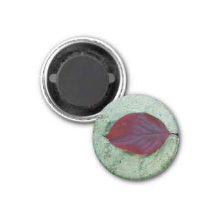 Dry Red autumn leaf laying on sand Refrigerator Magnets