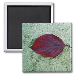 Dry Red autumn leaf laying on sand Magnets
