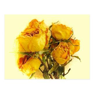 Dry Roses Postcard