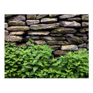 Dry Stone wall Postcard