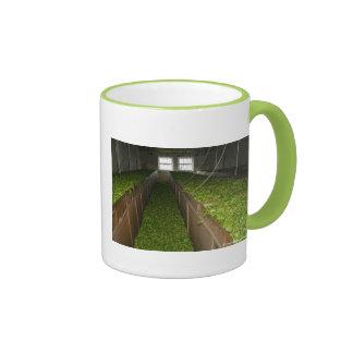 Drying tea leaves ringer mug