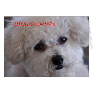DSC_0060, Bichon Frise Card