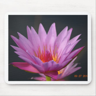 DSC_0191a.JPG Water Lily Mouse Pad