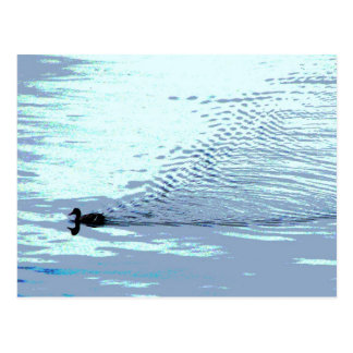 Duck and Ripples Postcard