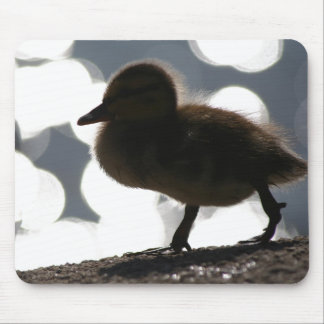 Duck Birds Animals Wildlife Photography Mouse Pad
