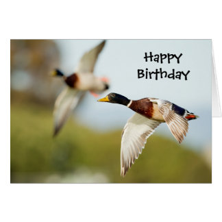 Duck Birthday Card (or any Occasion)