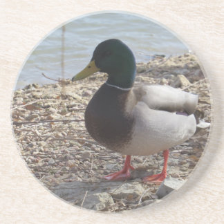Duck Coasters