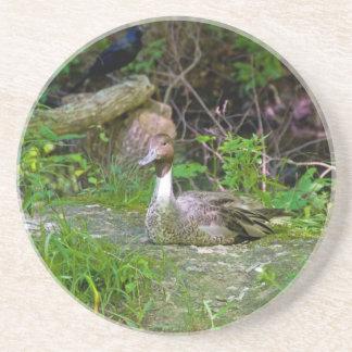 Duck Coaster