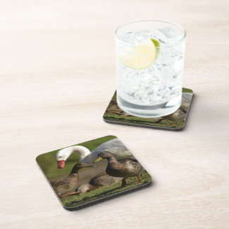 Duck Convention Cork Coaster