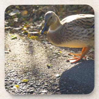 Duck Crossing Road Coasters