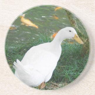 Duck Desire Drink Coaster