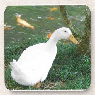 Duck Desire Coasters