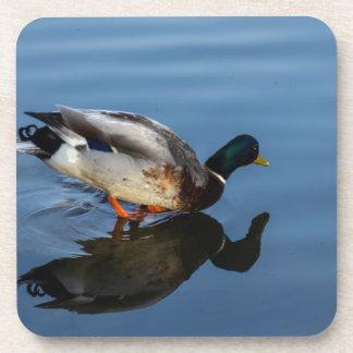 Duck, Duck...... Beverage Coasters