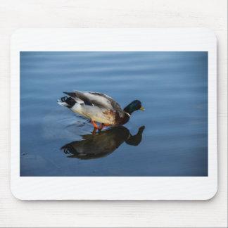 Duck, Duck...... Mousepads