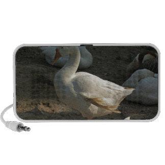 Duck enjoying the winter sun in Delhi Zoo Portable Speaker