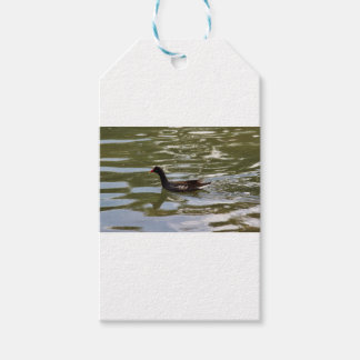Duck Gift Tags