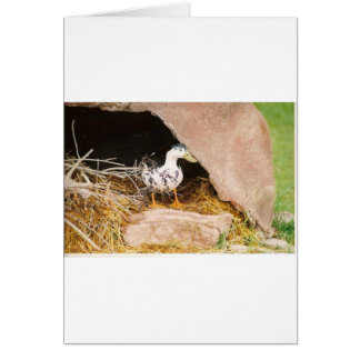 Duck Guarding Cave Card
