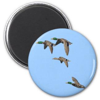 Duck Hunting Mallards in Flight 6 Cm Round Magnet