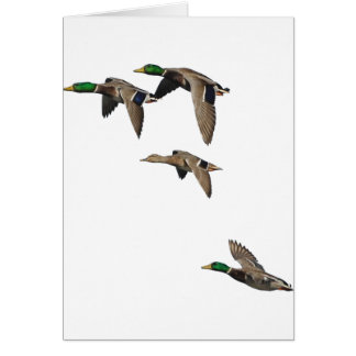 Duck Hunting Mallards in Flight Greeting Card