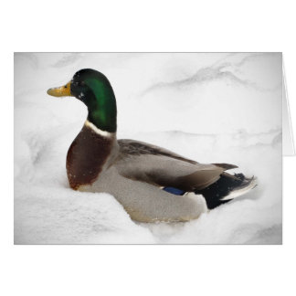 Duck in Snow Cards