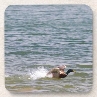 Duck Landing in Water Coasters