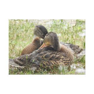 Duck Love Canvas Print