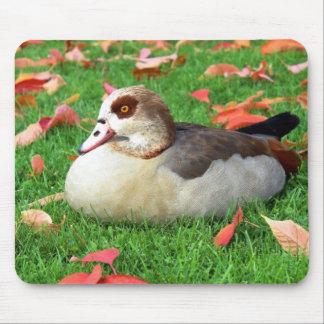 Duck lying in grass mousepad