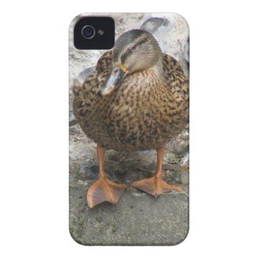 Duck on a Wall Blackberry Case