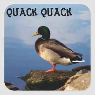 Duck on Rocks Square Sticker