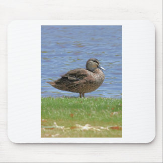 Duck Pond Mouse Pad