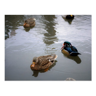 Duck Pond Postcard