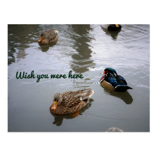 Duck Pond Postcard - Custom Text