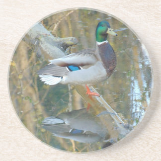 Duck Reflected Coaster