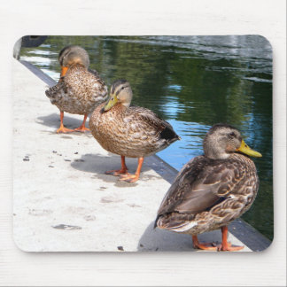 Duck Row Mouse Pad