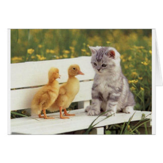 Duckheap and friend interview kitten. card