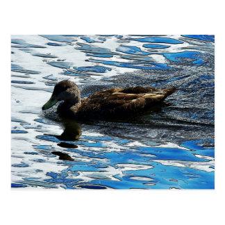 Duckie Postcard