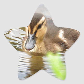 DUCKLING DUCK CHICKEN photo Jean Louis Glineur Star Sticker
