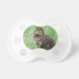 Duckling ~ duck chickens/photo Jean Louis Glineur Baby Pacifiers