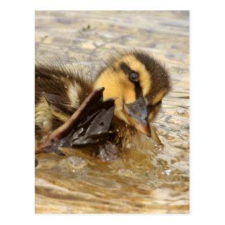 Duckling Postcard