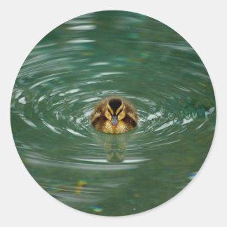 Duckling Small Sticker