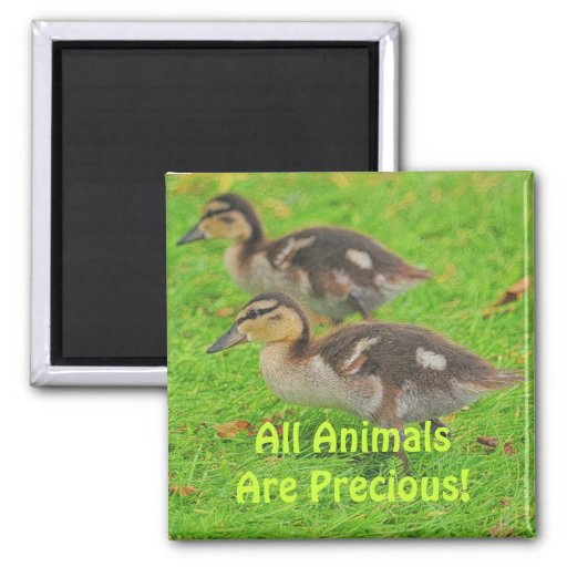 Ducklings Animal-lovers Wildlife Art Magnets