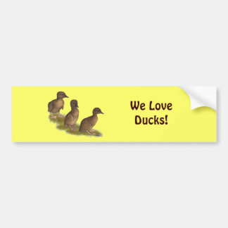 Ducklings:  Chocolate Runners Bumper Stickers