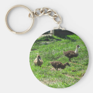 Ducklings on the Grass Basic Round Button Key Ring