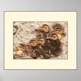 Ducklings Poster