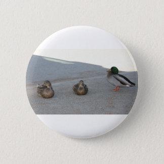 Ducks 6 Cm Round Badge