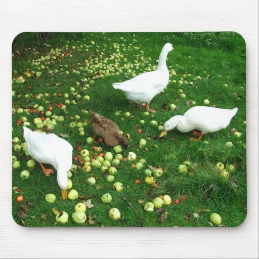 Ducks and goose in apple windfalls mouse mat