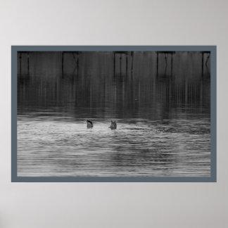 Ducks at the Refuge Poster