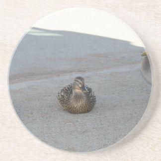 Ducks Beverage Coaster
