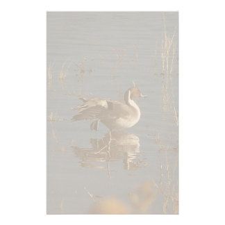 Ducks Birds Animals Wildlife Photography Custom Stationery